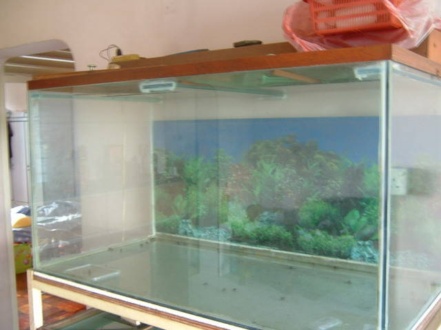 Big fish tanks for sale for sale adoption in singapore for Large fish tanks for sale