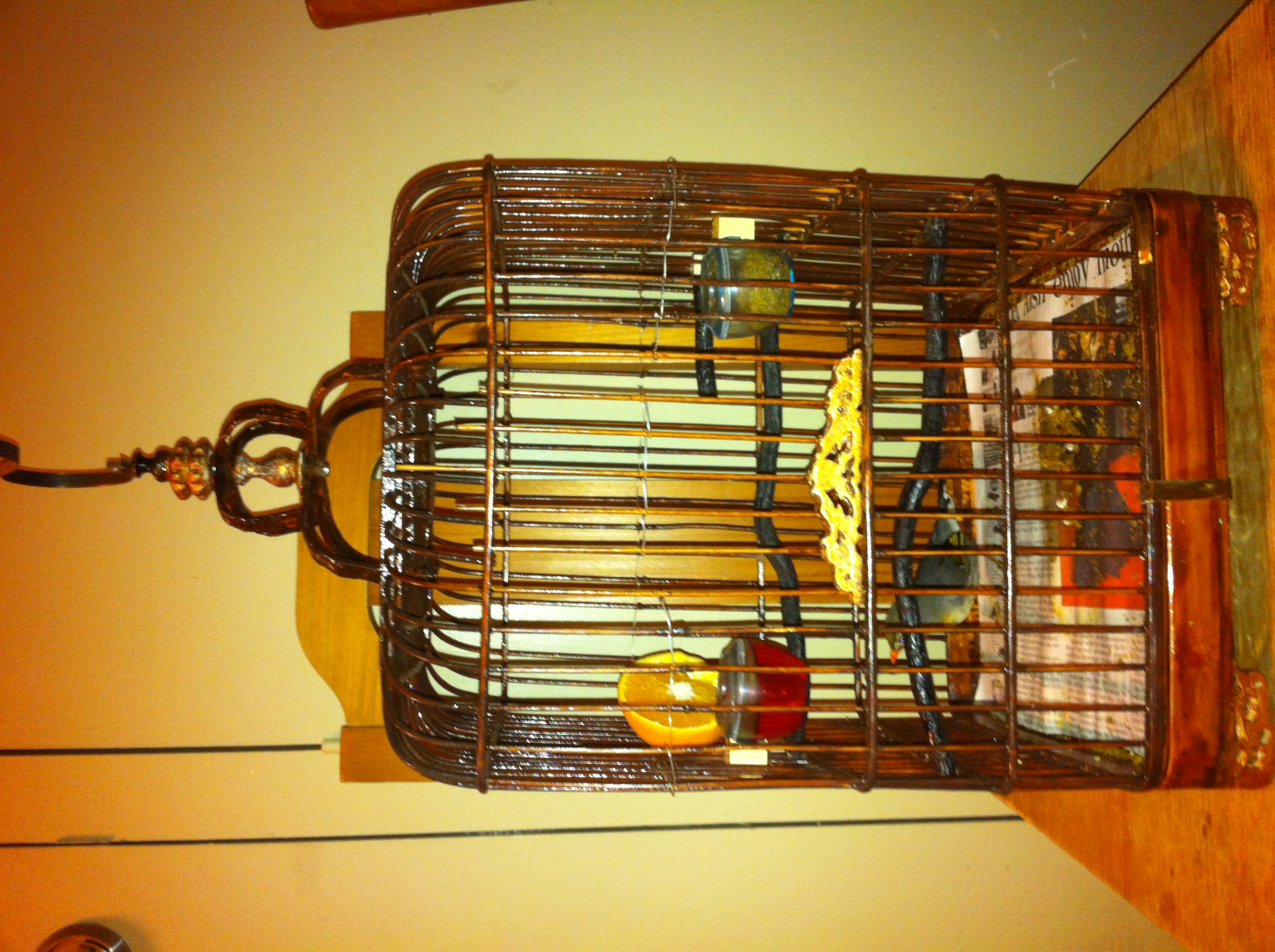 FOR SALE / ADOPTION: Male and Female Canary for sale