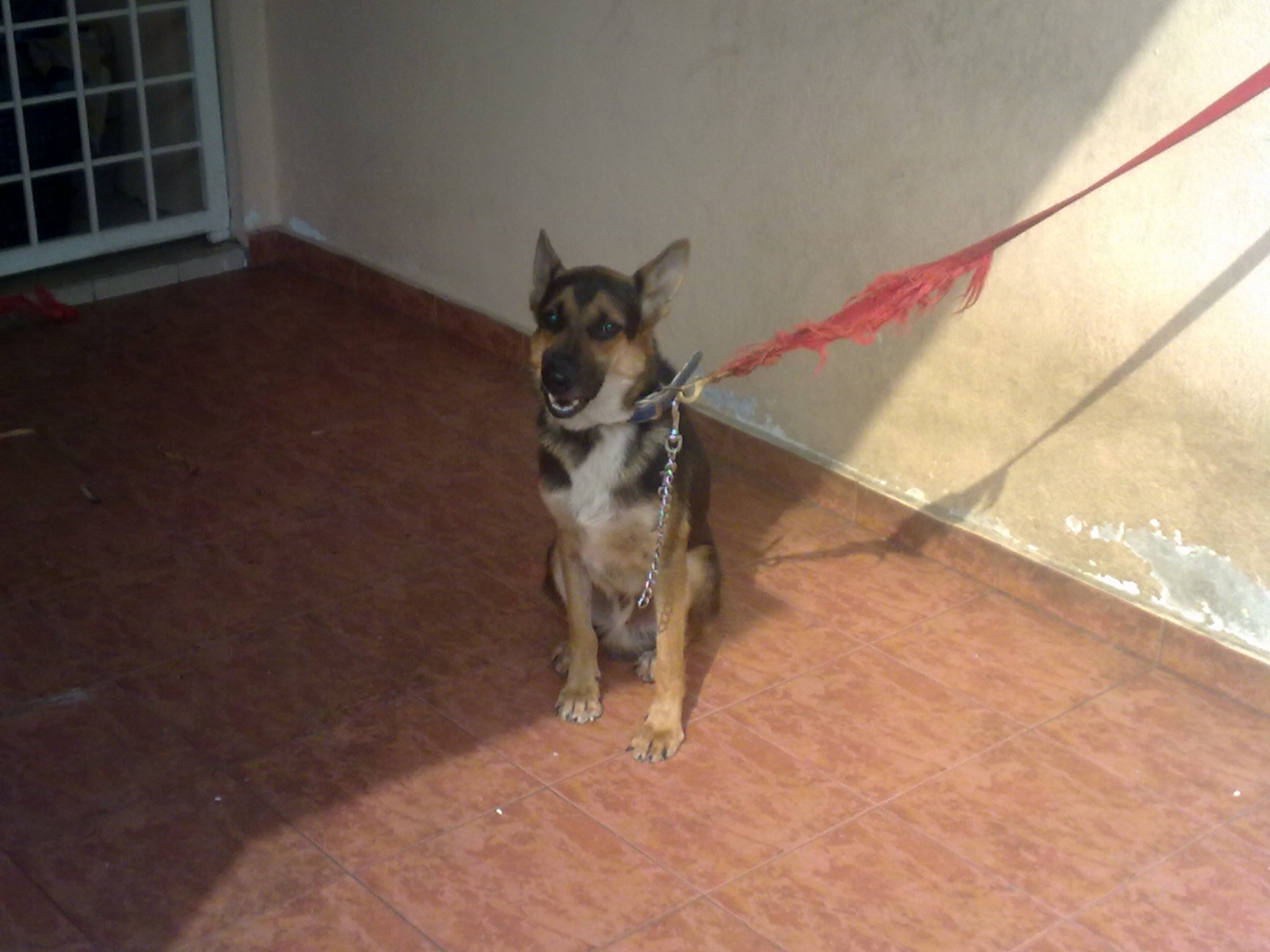 Mixed Breed Dogs for Adoption
