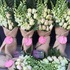 FOR SALE: Wish Your Special 'Jane' with Our Online Flowers Delivery Melbourne