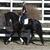 WANTED:  Wanted Home for My Athletic Sporthorse Friesian Horse