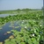 FOR SALE: Investment in Danube Delta