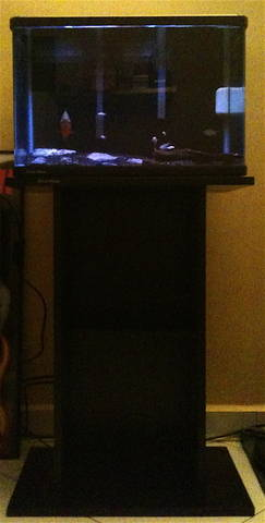 FOR SALE / ADOPTION: Five Plan GEX 1 and 1/2 ft cruve Tank with Five Plan GEX 1 and 1/2 ft Stand.Plus